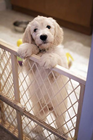 puppy at gate