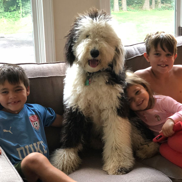 Debs Doodles Goldendoodle Puppy Reviews And Testimonials