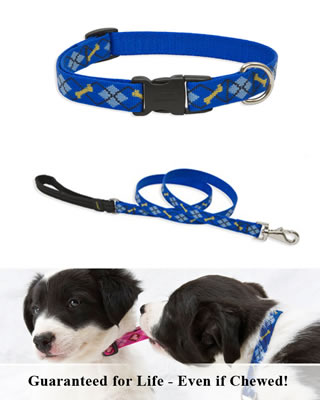 Lupine Collar and Leash - Dapper Dog