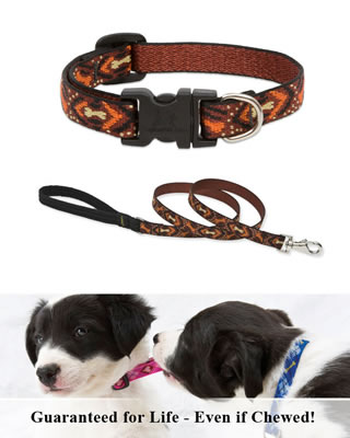 Lupine Collar and Leash - Down Under