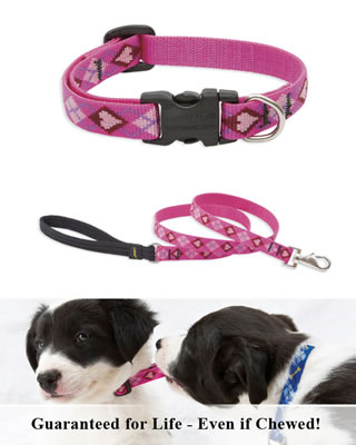 Lupine Collar and Leash - Puppy Love