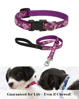 Lupine Collar and Leash - Rose Garden