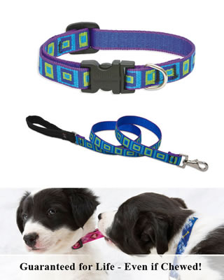 Lupine Collar and Leash - Sea Glass